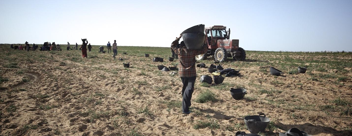 FairAnstaltung von Oikocredit mit SEKEM: Fairtrade – Was bringt's?